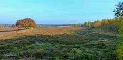 Planken Wambuis - Veluwe (Cajaflez) Tags: wood autumn trees field bomen ngc herbst herfst nederland thenetherlands plankenwambuis npc bos veld veluwe autun saariysqualitypictures heidevels