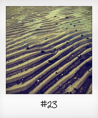 """#DailyPolaroid of 21-10-15 #23 • <a style=""""font-size:0.8em;"""" href=""""http://www.flickr.com/photos/47939785@N05/23377591086/"""" target=""""_blank"""">View on Flickr</a>"""