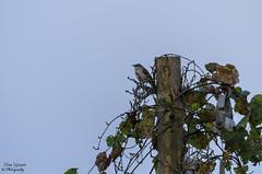 On Watch (photographyfun71) Tags: sky bird nature animal nikon pole d5100