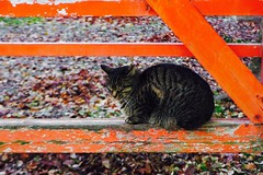 Today's Cat@2016-12-08 (masatsu) Tags: cat thebiggestgroupwithonlycats catspotting pentax mx1