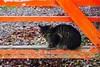 Today's Cat@2016-12-08 (masatsu) Tags: cat thebiggestgroupwithonlycats catspotting pentax mx1