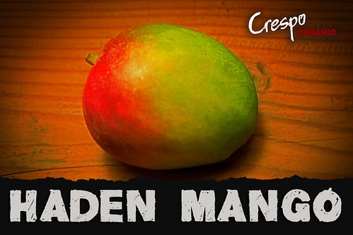 "Haden Mango • <a style=""font-size:0.8em;"" href=""http://www.flickr.com/photos/139081453@N03/30824926504/"" target=""_blank"">View on Flickr</a>"