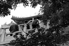 A window from the tree (Go-tea 郭天) Tags: canon eos 100d 50mm street urban city outside outdoor people bw bnw black white blackwhite blackandwhite monochrome asia asian china chinese jinan temple buddha religion religious buddhism buddhist old ancien traditional history historical tradition jinanshi shandongsheng chine cn specific angle view window aperture tree group friends together rest men young back backside backpack roof pavillon vegetation incense sticks bottle tired relax quite frame