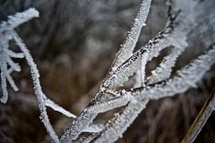 winter6 (GraphotequE.com) Tags: winter nikon20mm sonya7 waterland hemmeland nederland netherlands