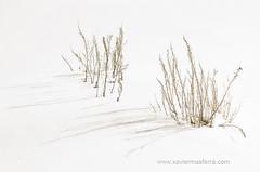 Blanco (Xavier Mas Ferrá) Tags: blanco sierranevada granada hierba sombra snow white