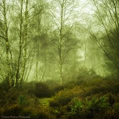 Fog on Houndown (Chalky666) Tags: tree trees silverbirch heathland common fog mist winter surrey painterly art