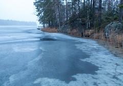 Kuusenhakureissu (Timo Räty (FI)) Tags: järvi jää ranta tammela kantahäme finland fin