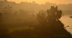 Misty Morning (Sanhita Bhattacharjee) Tags: sanhita tripura india nikkor nikon d7000 fogg mist morning winter google kalyanpur january 121 clicks flickr photography nature betterphotography 500px