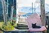 El Abandono 13 (Alejandro...) Tags: perro abandonado basura callejero ensayo ushuaia