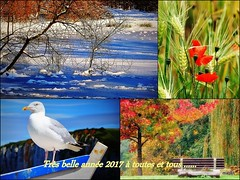 Bonne année! (marief76) Tags: printemps été automne hiver normandie nature mer campagne fabuleuseenfêtesf