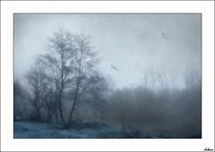 Frío (V- strom) Tags: invierno nikon naturaleza flora fauna río nikon2470 nikon50mm nikon105mm nubes niebla texturas paisajes
