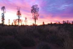 Dawn in Outback (sugar**) Tags: australia northernterritory sunrise dawn beuatiful pink outback redcentre オーストラリア ノーザンテリトリー サンライズ 夜明け ピンク アウトバック レッドセンター holiday travel ホリデー 旅行 canoneos600d canonefs18200mmf3556is