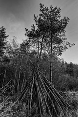 Delamere at Dawn (Ollie Smith Photography) Tags: delamereforest cheshire wood trees dawn earlymorning landscape nikon d7200 sigma1750 f28 lightroom5 blackwhite monochrome blackandwhite janurary