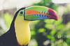 The colors of the toucan (- m i l i e d e l -) Tags: panama milie miliedel emiliedelmond travel voyage tropic tropical tropique exotique traveldeeper nikon nikonfr nikonfrance colors nature natgeo natureishome natgeotravel naturelovers landscape landscapephotography wildlife toucan bird oiseau