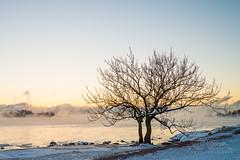 Smoke on the water in Helsinki, Jan 5th (Czzz) Tags: seasmoke sea finland helsinki mist winter sky sun sunrise snow ice cold freezing water clouds pier outdoor beach landscape shore seaside coast