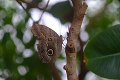 Hellios 44-2 (joewoodward2) Tags: bokehwhores butterfly helios bokeh