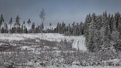 20170222100827 (koppomcolors) Tags: koppomcolors forest skog vinter winter värmland varmland sweden sverige scandinavia