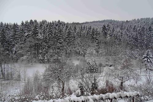 Schwarzbachtal 08.01.2016 , NGIDn592789537