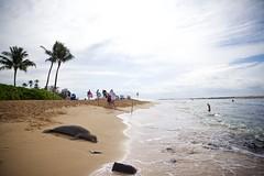 Beached (cookedphotos) Tags: canon 5dmarkii travel hawaii kauai poipu beach poipubeach park sand ocean pacific vacation relax animal seal monkseal