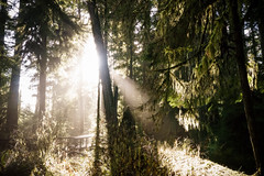 Light Thru Yonder (Carrie Cole Photography) Tags: albernivalley bc bigtrees britishcolumbia canada carriecole cathedralgrove landscape portalberni rays beams grove light nature old oldgrowth oldgrowthforest pacificnorthwest pnw scenic tourism trees vancouverisland