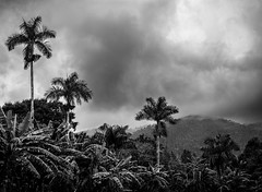 Cuban Hills (Dalliance with Light (Andy Farmer)) Tags: trees landscape palmtrees nature cuba mountains sky laterrazas hills mist forest plantation pinardelrío cu