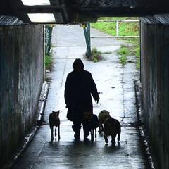 DSC_0593 (Di's Free Range Fotos) Tags: dogs dogwalker dogwalkies walks graffiti