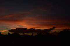 Sunday twilight (Dreaming of the Sea) Tags: nikon d7200 dusk tamronsp2470mmf28divcusd trees twilight redsunset clouds palmtrees powerlines powerpoles sunset orangesunset outdoor sky storm tamron2470mm 500v20f 1000v40f