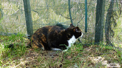 P1390734 (Christen Ann Photography) Tags: 2016 animals carterton cat christmas201617 christmasholidays december2016 gabby newzealand wairarapa