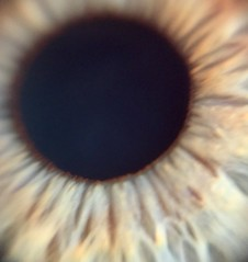 my eyeball (Biol205H 2017) Tags: 10microscope thankstokenjiyoshinoforthedesign uncchapelhill biol205h microscopic
