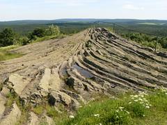 Geotop Palmwedel am Hirtstein