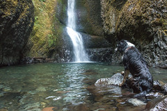 Oneonta Falls (Justin Knott) Tags: dogs oregon waterfall nikon oneonta
