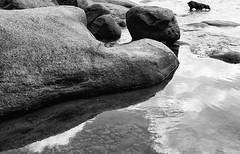 fisch hund (Light Orchard) Tags: bw dog chien white abstract black blanco nature water monochrome rock stone blackwhite rocks noir negro monochromatic hund weiss bianco blanc nero schwarz bruceschneider 2015lightorchard