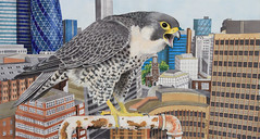 "Artwork ""Peregrine Falcon"" 2015 (Wild Chroma) Tags: bird london art nature illustration painting artwork drawing wildlife gouache gherkin markers falco letraset tria birdeye falcoperegrinus peregrinus"