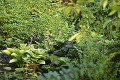 _JIM2218 (James J. Novotny) Tags: nature gardens garden bench botanical path arboretum paths benches