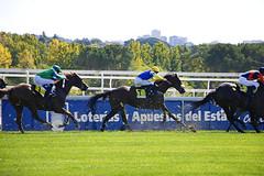 Un domingo en la hpica (Eduardo Valero Suardiaz) Tags: madrid sky horse verde green grass race caballo riding cielo carrera cesped hipica
