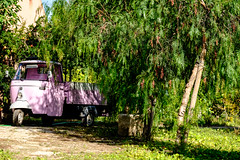 Lurking in the undergrowth (Lee Rudd Photography) Tags: italy holiday italia it sicily sicilia trapani marsala mozia mothia motya