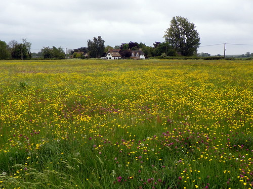 Godmanchester to St Ives 073: Meadow in Hemingford Abbots