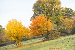 Hatfield_Forest-55 (Eldorino) Tags: park uk morning autumn trees nature forest sunrise landscape countryside nikon britain centre jour hatfield bishops stortford essex hertfordshire stanstead hatfieldforest