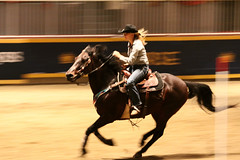 RAWF15 JSteadman 0112 (RoyalPhotographyTeam) Tags: sun royal rodeo 2015 rawf nov08