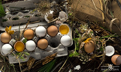 eggs (Katie Kramer Photography) Tags: food nature contrast commercial eggs