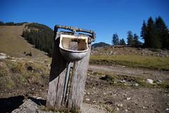 mia han durst (Fooß) Tags: tiere kuh weide wasser natur wiese berge steine alm alpen trinken holz kühe schafe ziegen eisen vieh rohre tränke
