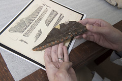 Texas and English cousins (SMU Research Blog) Tags: england fossil dallas texas unitedstates paleontology lakelewisville cretaceous pterosaur brentdunn scottmyers eagleford dedmancollegeofhumanitiesandsciences timothyscottmyers petrosaurjawbone