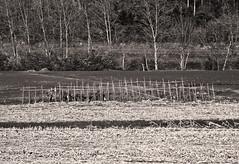 luces y sombras. (Luis Mª) Tags: blancoynegro paisaje bidasoa bidasoatxingudi irun afiiae lucesysombras árboles