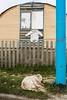 El Abandono 11 (Alejandro...) Tags: guardapolvo perro abandonado basura callejero ensayo