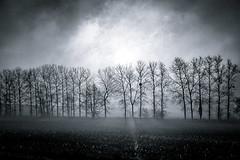 winter morning (StefanSpeidel) Tags: belgium stefanspeidel fog tree elitegalleryaoi bestcapturesaoi