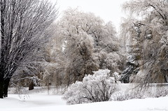 The tranquil Winter air (Captions by Nica... (Fieger Photography)) Tags: weather winter serene snow snowstorm storm outdoor trees tree branches covered january wonderland cold quebec canada