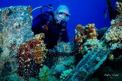 Two's company, three's a crowd (Patxikun) Tags: wreck octopus behaviour mating redsea gubalisland egypt