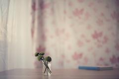 ... (L'hort de la Lolo | Agnès) Tags: feelinggreen 50mm flor flowers green stilllife ram bouquet window finestra llibre book lhortdelalolo