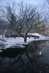 Central Park- New York (geraldineh.dutilly) Tags: