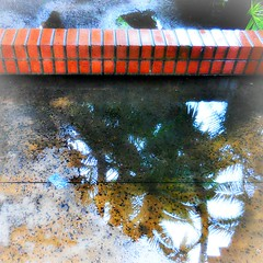 What a puddle-wonderful world ! (Dom Guillochon) Tags: time life existence reality dream rain rainyday southerncalifornia winter bricks wall water humans people reflections palms nature photosynthesis puddlewonderful world